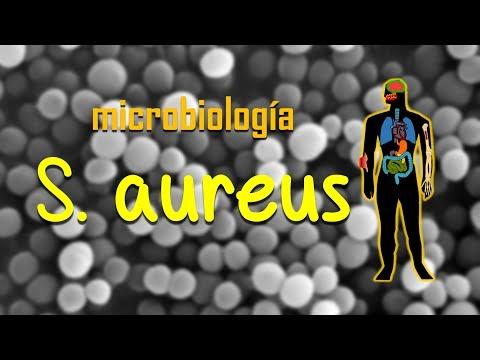 Staphylococcus aureus. Revisión rápida.