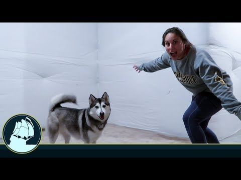 is our husky getting her OWN BEDROOM?!
