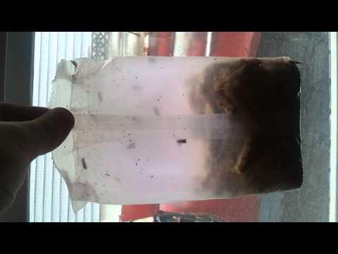 Pantry moth infestation