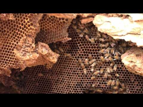 Underground Bees