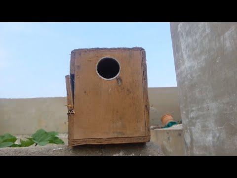 Love birds ke cage ki size & breeding box ki size in details [ in urdu & hindi ]