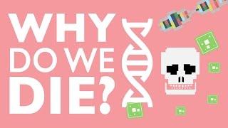 Download WHY DO WE DIE? Video