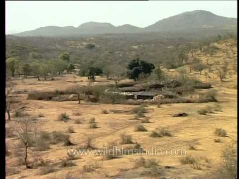 Maldhari homes in ness village at Gir, Gujarat