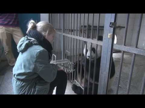 Saving the Giant Panda, Murrow College BPJ in China