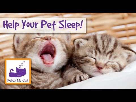 RELAXING MUSIC FOR CATS & KITTENS Help Your Pet Sleep!