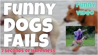Funny dogs fails 🔸7 second of happiness FUNNY Video 😂 #358