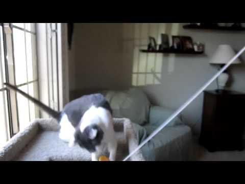 Pet Sitting, Pet Sitter, Dog Sitter, Cat Sitter, Phoenix, Glendale, Tolleson, Avondale
