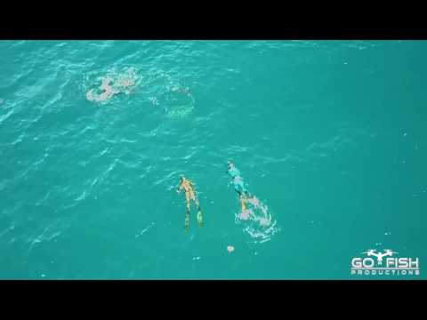 Drone Footage of Bull Shark attack on Spearfishing Team | Mavic Pro