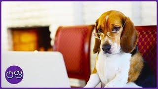 ყველაზე ჭკვიანი ძაღლები მსოფლიოში ★ ტოპ ფაქტები ★