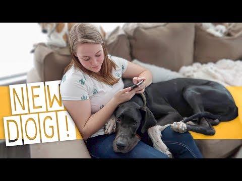 We Got Her Service Dog In Training!