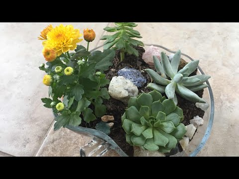 Make Indoor Succulent Garden