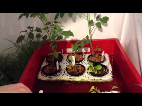 Mini Aquaponic Indoor Grow Room System with LED Lights