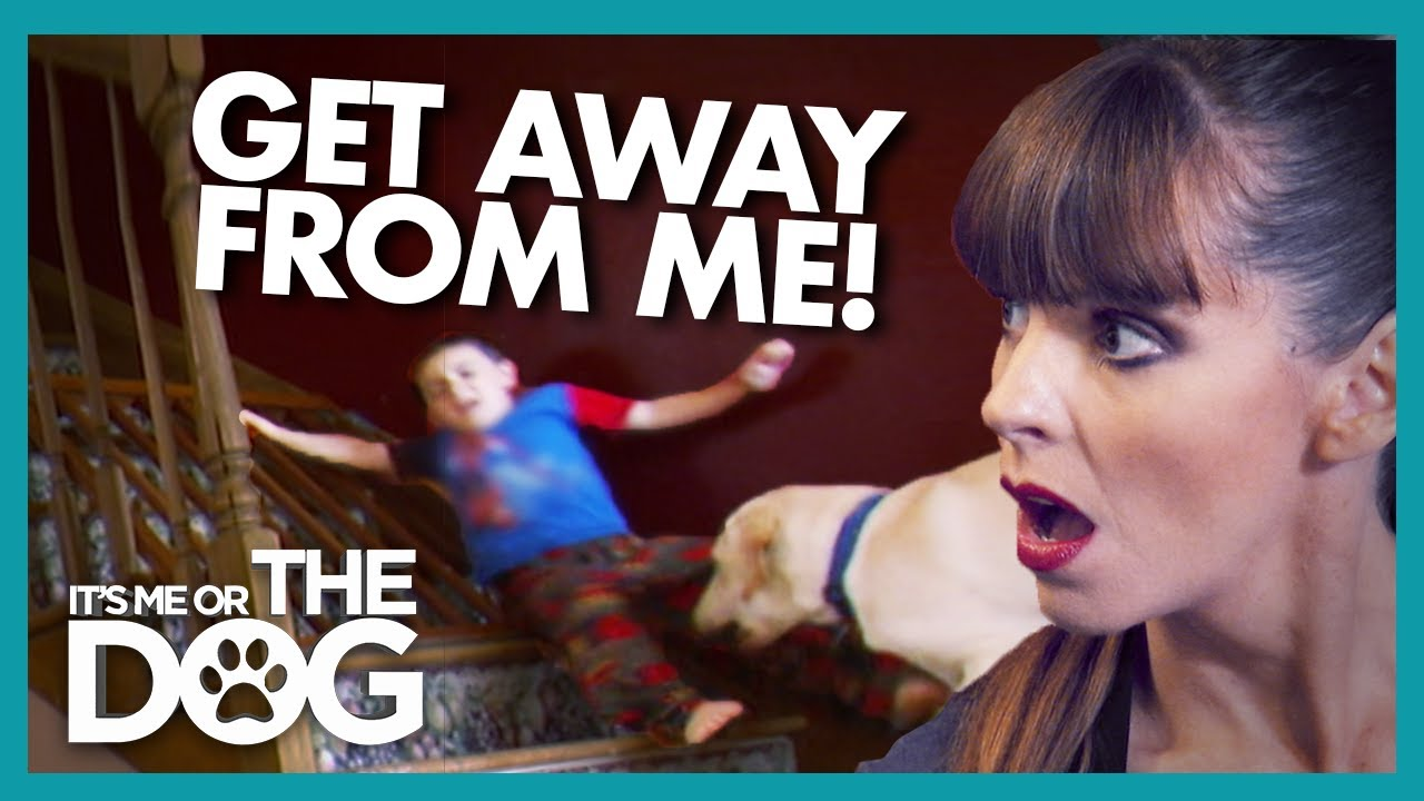 Kid Dragged Around the House by Family Dog | It's Me or the Dog