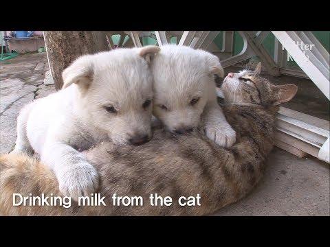 Xxx Mp4 Cute Puppies 39 Mom Is A Cat SBS Animal 3gp Sex