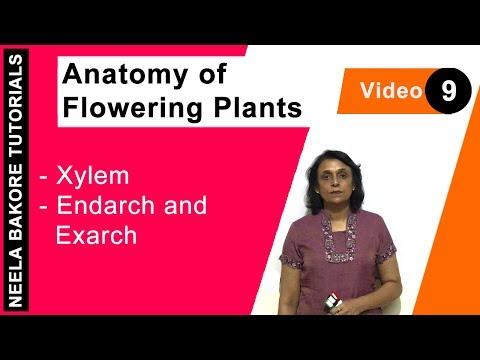 Anatomy of Flowering Plants - Xylem - Endarch and Exarch