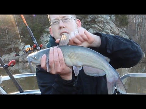 How to Hold a Catfish Without Getting Stung - Catfish Spines