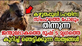 സിംഹത്തെ വരെ തിന്നുന്ന ഹയിന ! Shocking Facts About Hyena ! Hyena Vs Lion |കഴുതപ്പുലി
