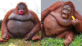 10 Fattest Animals in the World