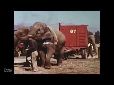 Cole Bros & Clyde Beatty Circus -Arrival, Build Up, Parade, Show