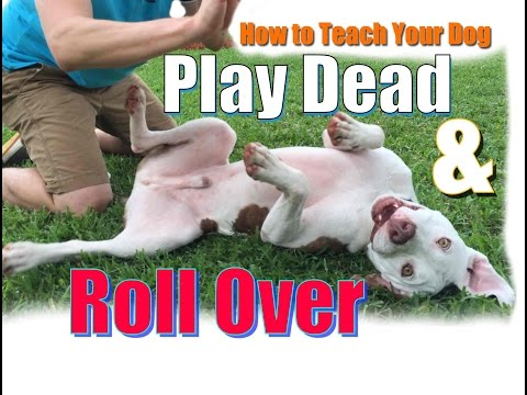 How to Teach Your Dog to  Roll Over and