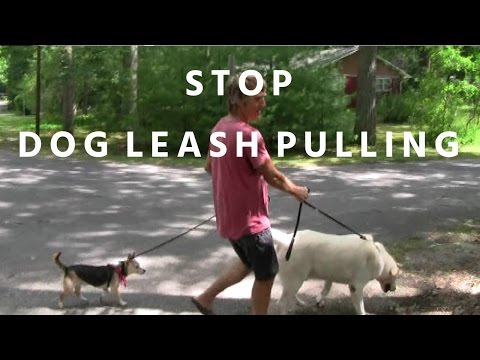 How To Stop Dog Leash Pulling