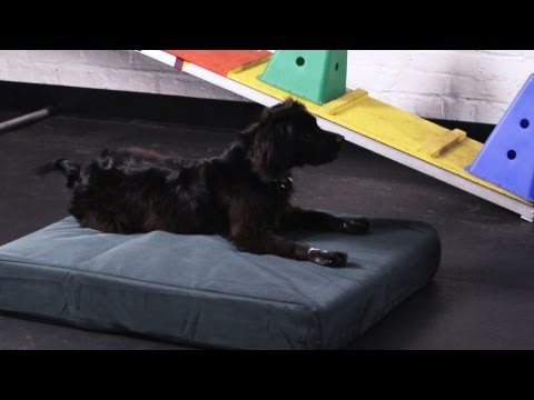 How to Teach Your Dog to Go to His Bed | Dog Tricks