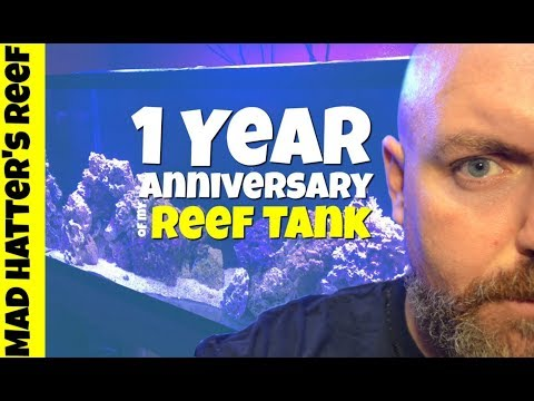 1 Year Anniversary of my Reef Tank