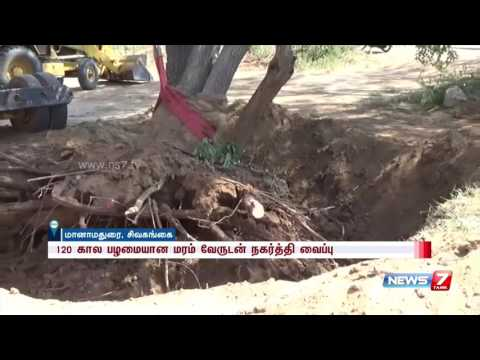 120 years old tree moved to different location after national highway extension | News7 Tamil