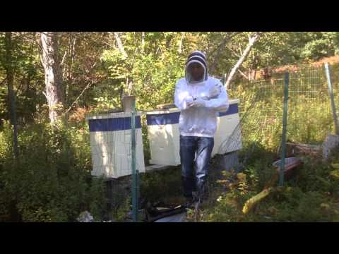 Summer Harvest: Chasing Honey Farms