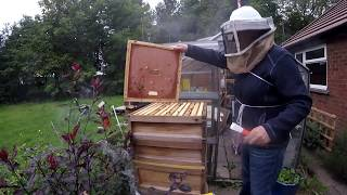 Download Beehive Inspection 27 Aug 2018 Stung twice Video