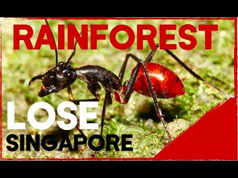 Singapore biodiversity loss
