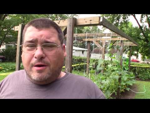 How To Save Time Growing Tomatoes Vertically by Using a Mooring HItch Knot