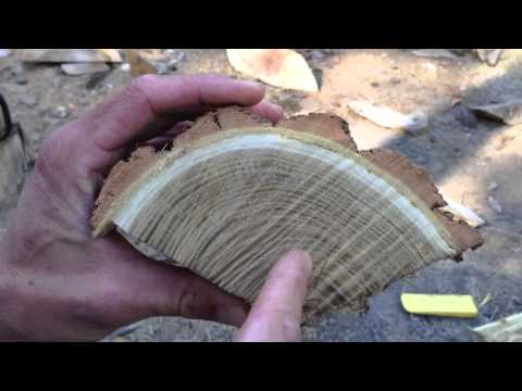 Splitting Wood Logs for Bow Staves