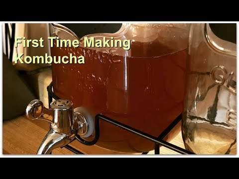 Making Kombucha for the first time