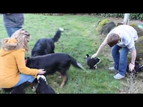 Proud Papa dog Sam meets his puppies