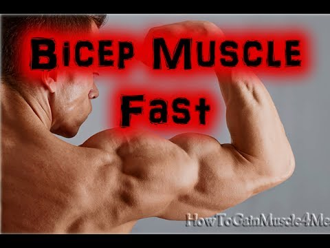 How To Build Bicep Muscle Fast - Bodybuilding Tips