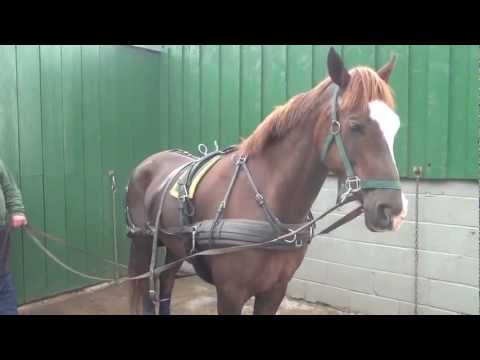 P1 - Breaking your own horse to harness - retraining a horse that bolted pulling a tyre.