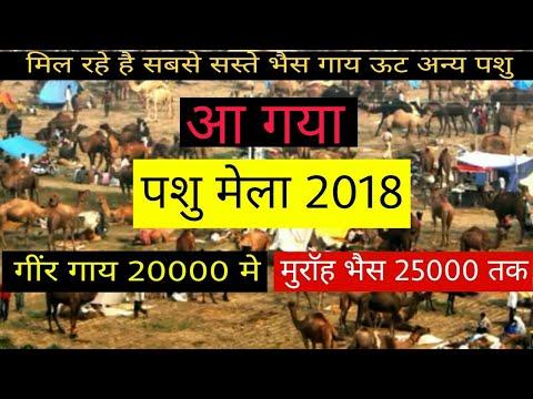 Pashu Mela 2018 | सबसे सस्ते पशुओ का  मेला | पशु मेला राजस्थान