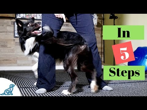 How To Teach Your Dog To Weave Through Your Legs