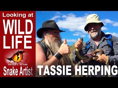 Tassie Herping with Martin Daniel