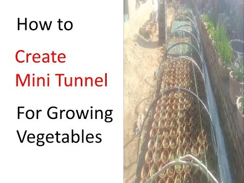 How to Create Mini Tunnel for Growing vegetables in winter (Urdu / Hindi)