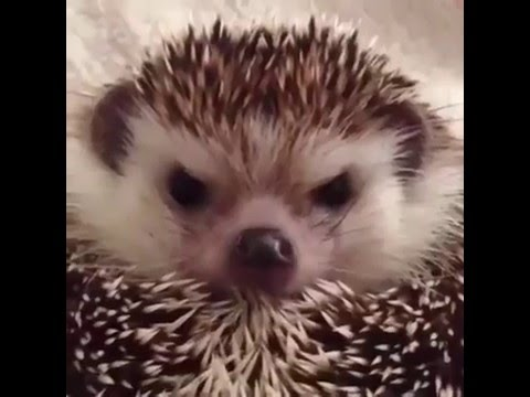 How to make an angry hedgehog happy. comment his name please