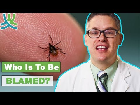 What Causes Lyme Disease?