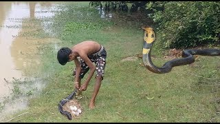 Wow! Amazing Boy Catch Big Snake With The Bottle Plastic Trap In My Village