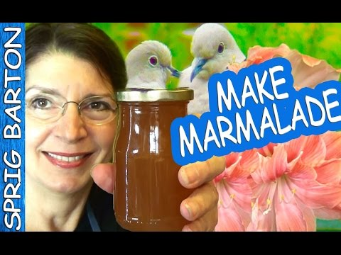How to Make THE BEST MARMALADE Recipe! LEMON MARMALADE! ORANGE MARMALADE! Lemon Jelly! Sprig Barton