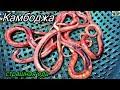 Download Камбоджа 2017.Страшная еда.Брезгливым и впечатлительным смотреть не надо.м In Mp4 3Gp Full HD Video