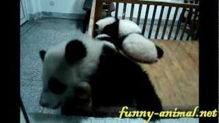 Panda baby escaping from the crib 熊猫宝宝越狱