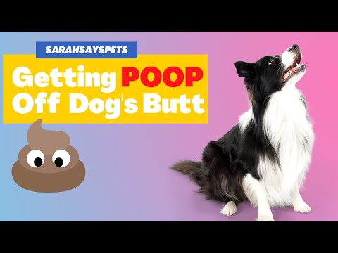 Getting Poop Off Your Dog or Puppy's Butt
