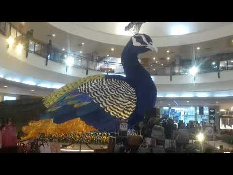 Vlog | Come with me to see the most beautiful peacocks, beautiful fishes swim | GoldQueen Queency