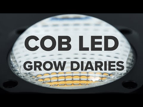 COB LED grow diaries | Featuring MIGRO